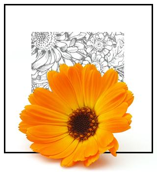Dámské niche parfémy - květinové