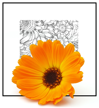 Niche parfémy - květinové